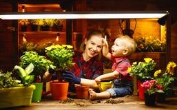 La madre ed il bambino della famiglia coltivano i fiori, piantine del trapianto in luccio Fotografie Stock