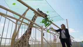 La madre ed il figlio alimentano la giraffa allo zoo stock footage