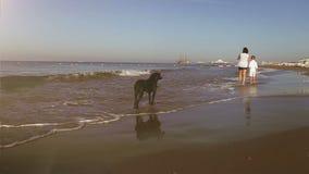 La madre ed il figlio camminano lungo il litorale che è guardato da un grande segugio nero stock footage