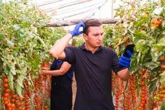 La madre ed il figlio con la compressa controllano gli ordini online del raccolto del pomodoro ciliegia nell'affare di famiglia d fotografia stock