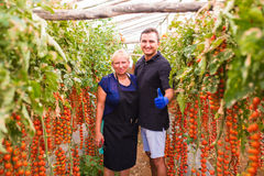 La madre ed il figlio controllano il raccolto del pomodoro ciliegia nell'affare di famiglia della serra Immagini Stock Libere da Diritti