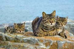 La madre en el mar oscila la familia de gatos y de gatitos Imagen de archivo