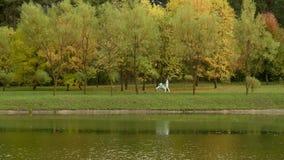 La madre joven con el strolle del cochecito de niño camina por el lago D3ia del otoño Tiro liso del carro almacen de metraje de vídeo