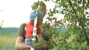 La madre y el hijo joven comen bayas del árbol Bebé hermoso menos que un año almacen de video