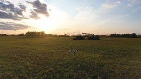La madre y el niño corren con una cometa en un campo verde. Risas y alegría, ánimo festivo. Otoño,Amanecer almacen de metraje de vídeo
