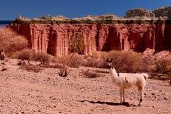 La maggior parte della campagna del beautifull in Bolivia Fotografia Stock