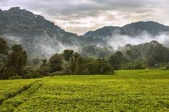 La magia de la selva tropical Imagen de archivo