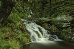 La magia del bosque Foto de archivo libre de regalías