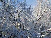 La magia dell'inverno ed il sole dopo la neve fotografia stock libera da diritti