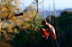 La magia delle foglie è soltanto fotografie stock
