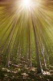 La magia sogna la foresta Fotografia Stock Libera da Diritti