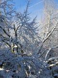 La magie de l'hiver et le soleil après la neige photographie stock libre de droits