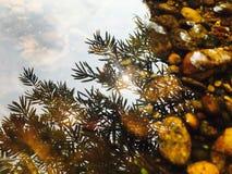 La magie de la lumière du soleil Photo libre de droits