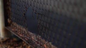 La maglia del recinto è coperta di corrosione della ruggine di metallo stock footage