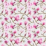 La magnolia fiorisce la priorità bassa Fotografia Stock Libera da Diritti