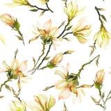 La magnolia gialla fiorisce su un ramoscello su fondo bianco Reticolo senza giunte Pittura dell'acquerello Disegnato a mano Fotografia Stock Libera da Diritti
