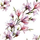 La magnolia rosa fiorisce su un ramoscello su fondo bianco Reticolo floreale senza giunte Disposizione diagonale Pittura dell'acq Fotografia Stock