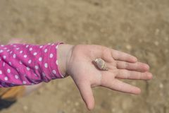 La main avec la coquille sur le fond de sable la main des enfants tenant une coquille sur la paume photographie stock