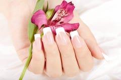 La main avec de longs ongles manucurés français artificiels et le lis fleurissent Images stock