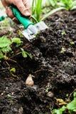 La main d'une femme creuse le sol et le sol avec une pelle Plan rapproché, Conce Photographie stock
