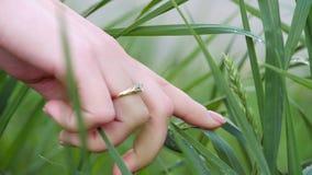 La main de la femme avec un diamant sur son doigt, remises mouillent des baisses avec l'herbe verte banque de vidéos