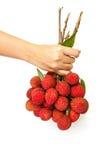 La main de femme donnent un groupe de fruits de Lychee Images stock