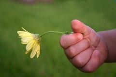 La main de l'enfant en bas âge retenant la fleur jaune à l'extérieur image libre de droits