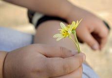 La main de l'enfant tient une fleur images stock