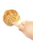 La main de l'enfant touche un seashell photographie stock libre de droits