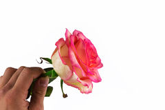 La main de l'homme donne la rose Déclaration de l'amour Images libres de droits
