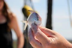 La main de l'homme supportant des poissons de fan Photos libres de droits
