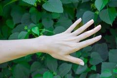 La main de la jeune fille sur le vert pousse des feuilles fond Photos libres de droits