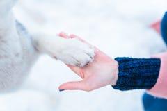 La main de personne féminine tient le plan rapproché enroué de patte de chien Photographie stock libre de droits