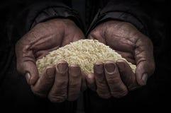 La main de travailleurs portent le riz Images stock