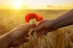 La main donne une fleur des pavots avec amour au coucher du soleil Image stock