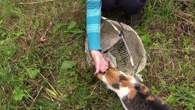 La main donnent de petits poissons crucian frais pour l'animal familier de chat closeup Images libres de droits