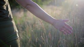 La main droite d'une jeune femme séduisante touchant des pousses d'herbe dans le mouvement clips vidéos