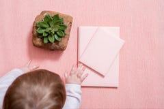 La main du petit bébé Une chéri mignonne Carnet rose, cactus succulent sur un fond rose Style minimal valentine de maquette photos stock
