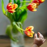 La main du ` s d'enfant atteint à un bouquet des tulipes photo libre de droits