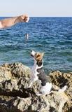 La main du ` s de pêcheur avec un crochet et un chien Photos libres de droits