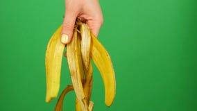 La main femelle avec la manucure jaune tient la peau de banane sur une clé verte de chrome de fond clips vidéos