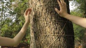 La main femelle et masculine touche l'écorce d'un érable décoré d'une corde de métier clips vidéos