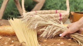 La main femelle met la culture de blé clips vidéos