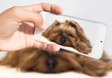 La main femelle prend un petit chien sur le smartphone Photo stock