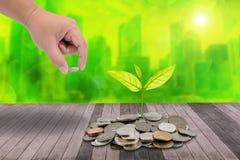La main masculine mettant l'argent invente sur la pile des pièces de monnaie et de peu d'arbre o Photos libres de droits