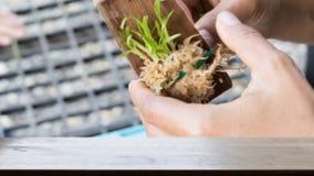 la main a mis la jeune plante de culture de tissu sur le conseil en bois et le x28 ; image& x29 de tache floue ; W Images libres de droits