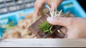 la main a mis la jeune plante de culture de tissu sur le conseil en bois et le x28 ; image& x29 de tache floue ; W Photographie stock
