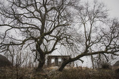 La maison abandonnée et en panne a gardé par deux arbres énormes Photos libres de droits