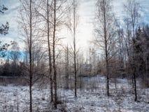 La maison dans un bois d'hiver Photo stock