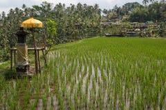 La maison des spiritueux dans le riz met en place dans Ubud, Bali Photographie stock